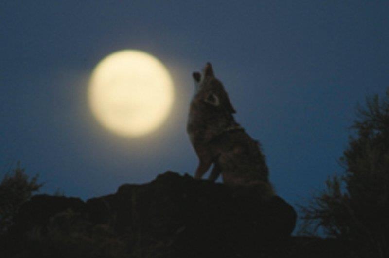 Mondscheinführung