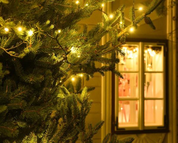 Baum und Fenster mit Beleuchtung@Lederer