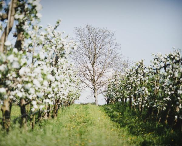 Werbefoto Obstgarten im Frühling@Lind