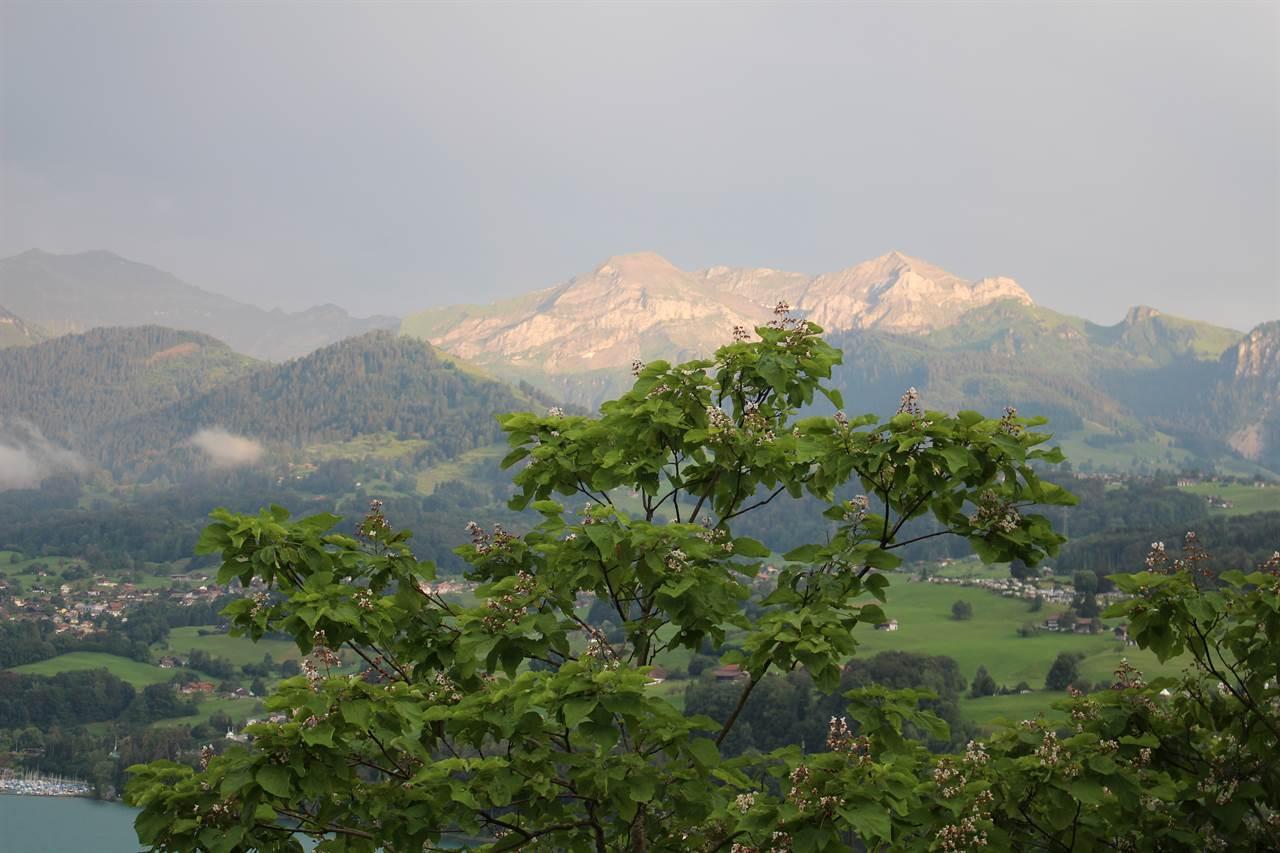 Berge zum Greiffen