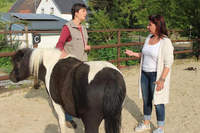 Pferdeaufstellung, @ Einklang Eifel