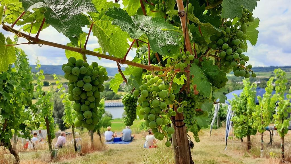 Pichnick beim Weinprobenspaziergang