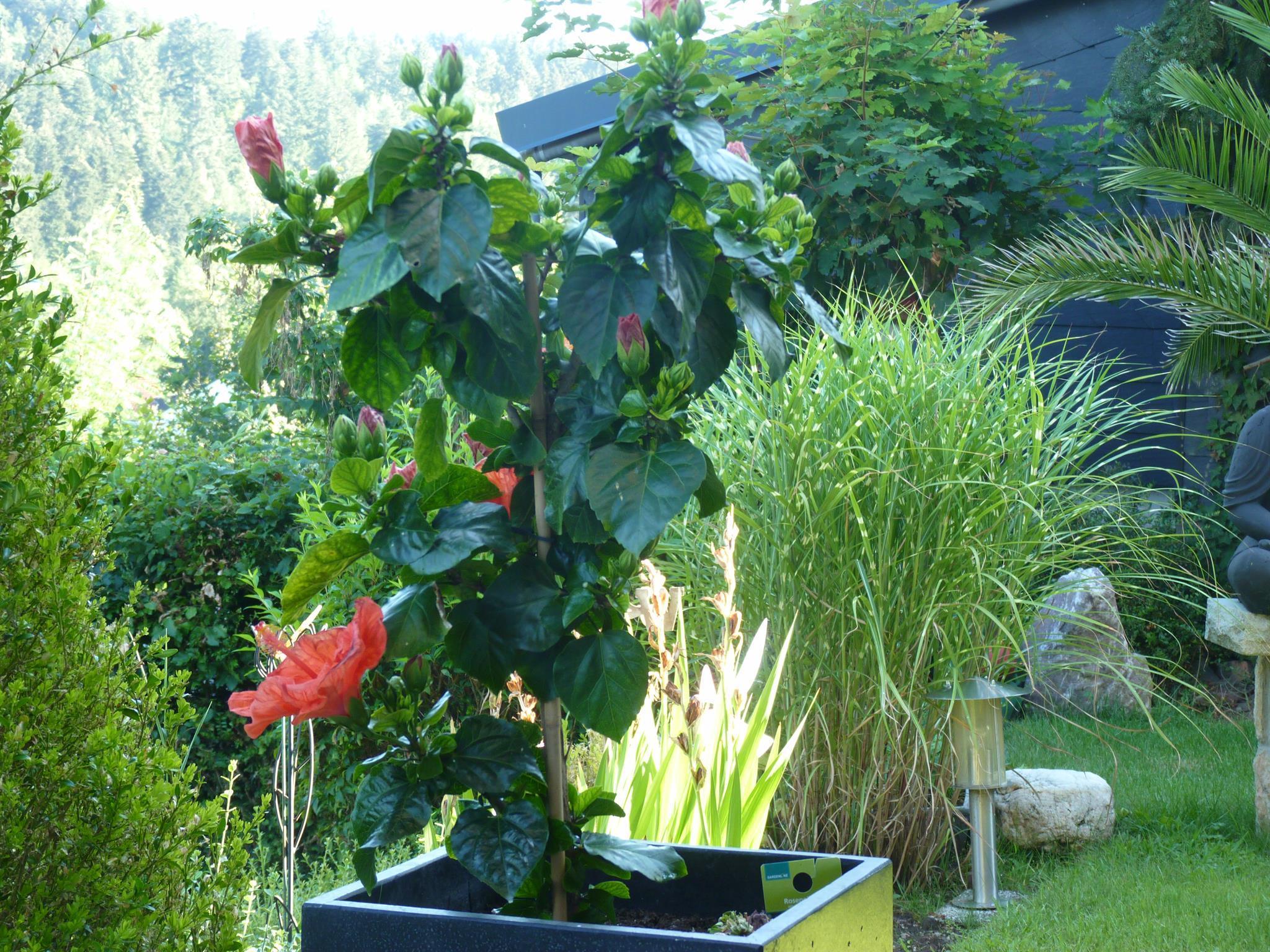 Garten (09)