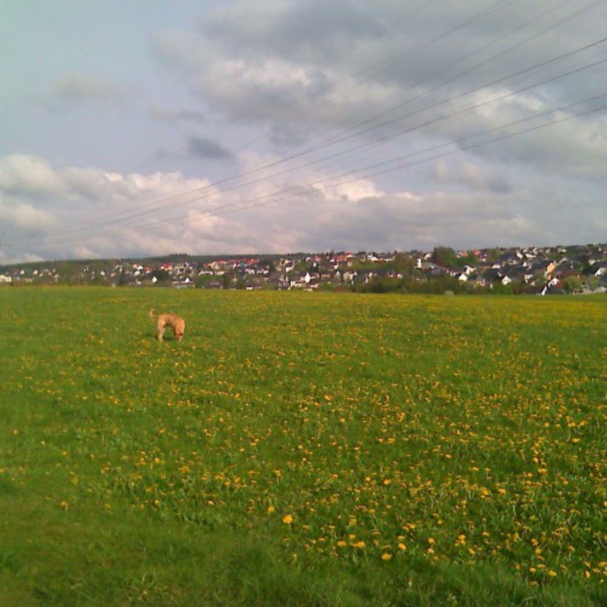 Osburg
