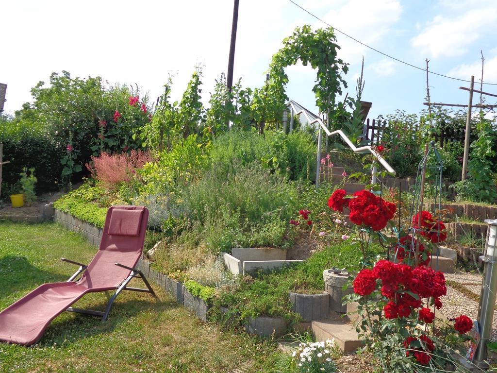 Im Garten hinterm Haus