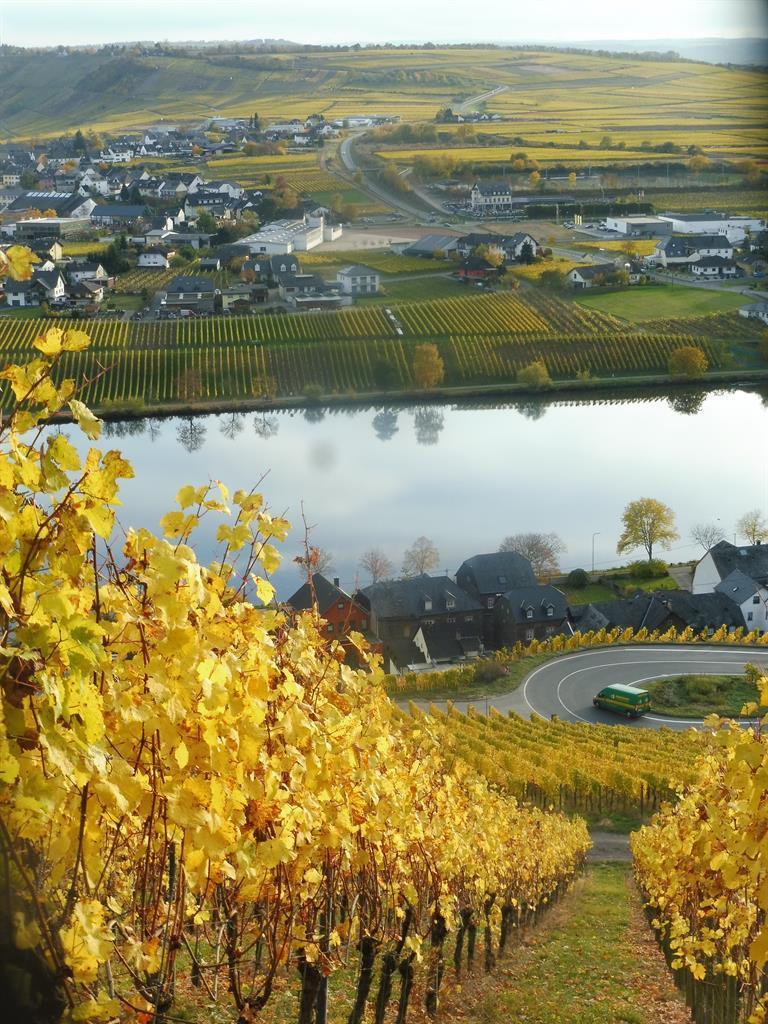 Bild Goldtröpfchen im Herbst