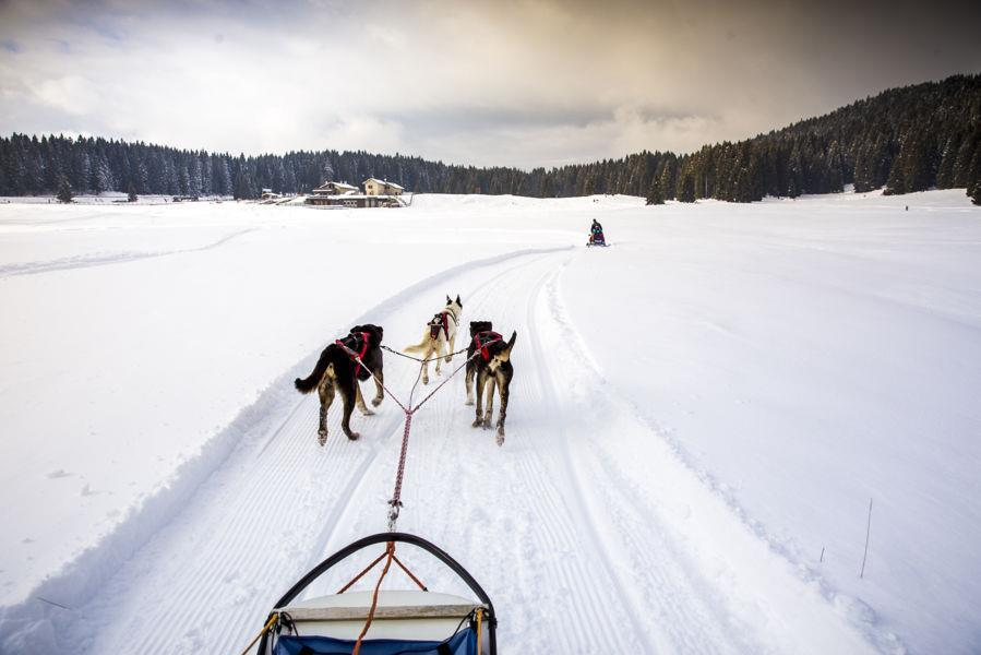 European Championships Long and Middle Distance Sled Dog Event