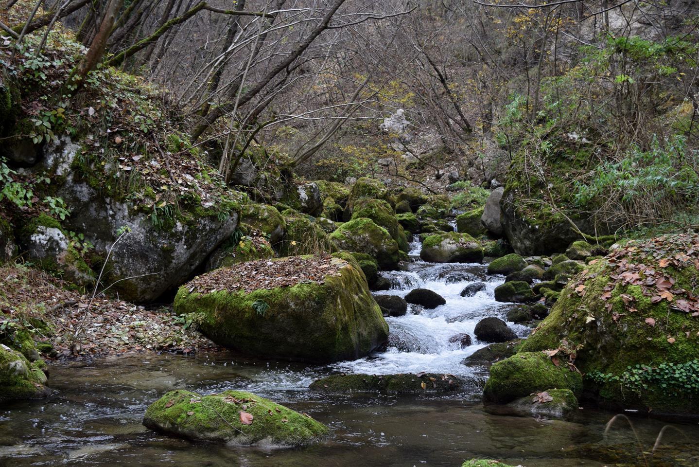 Il canto della Foresta