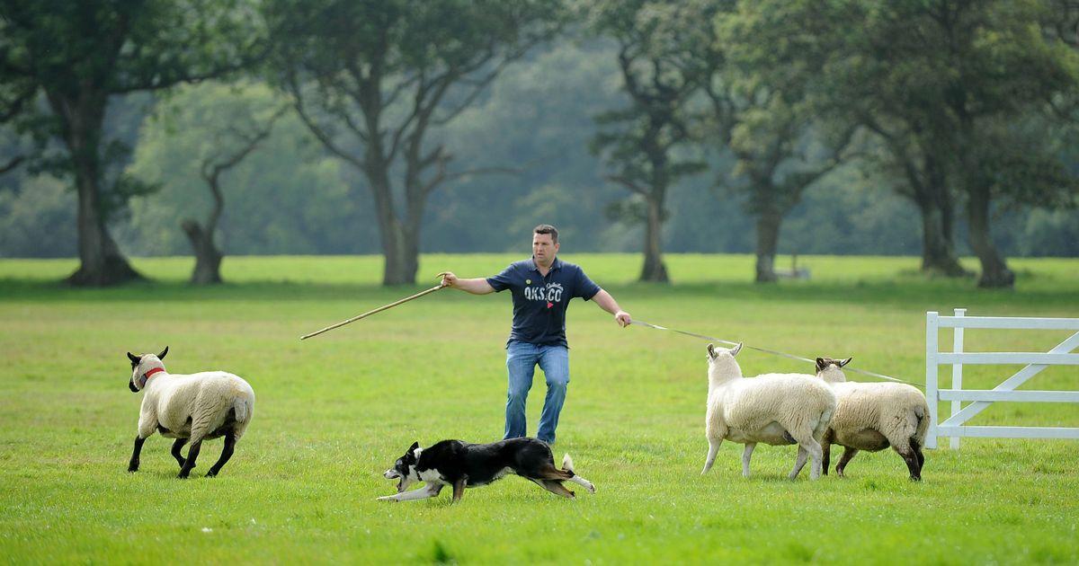 Millegrobbe Sheepdog Trial