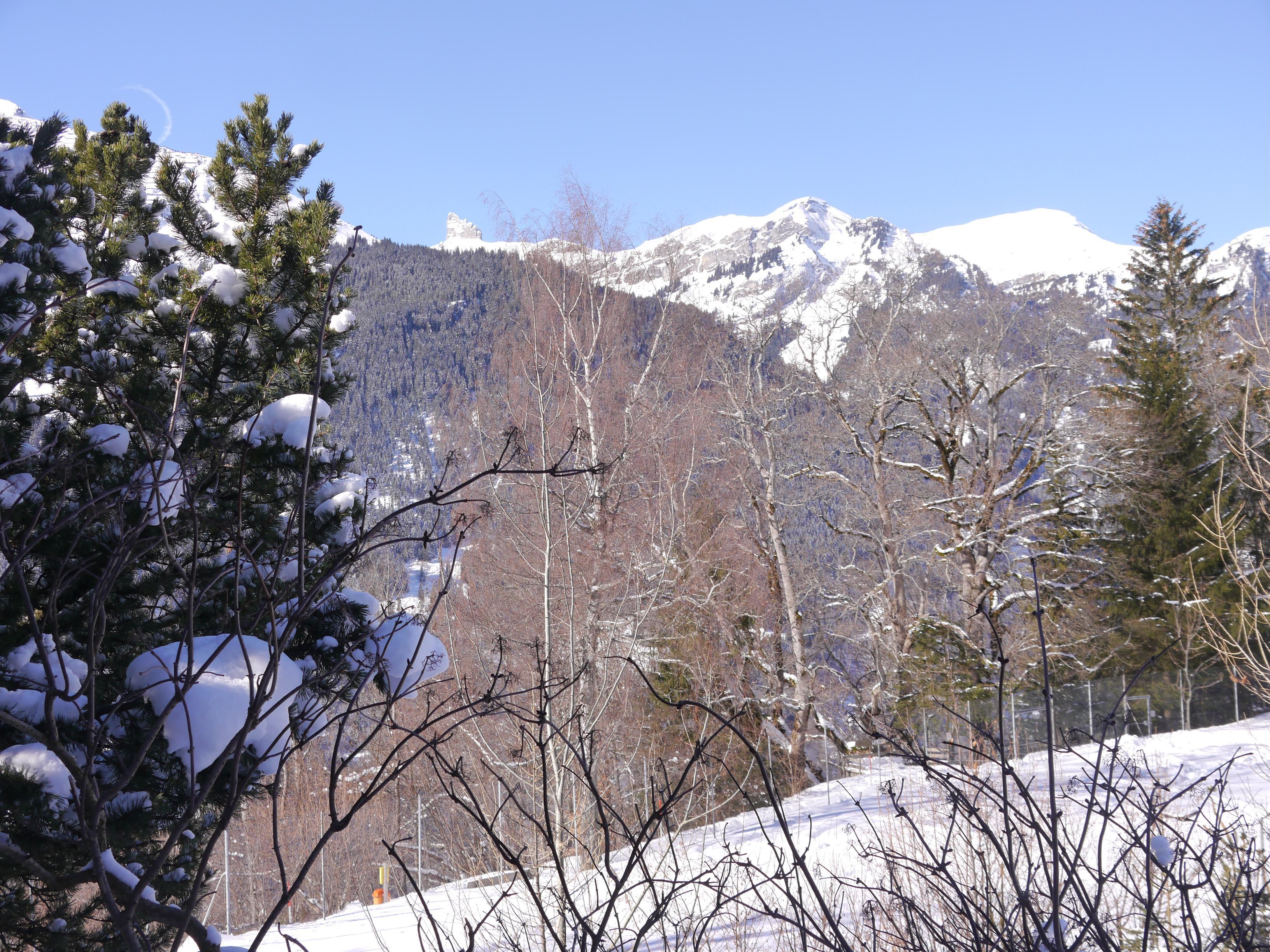 Ferienwohnung Birkli 2 2 Bett Wohnung Obj. W2002 (2575325), Wengen, Jungfrauregion, Berner Oberland, Schweiz, Bild 10