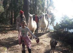 Wandern mit Tiere