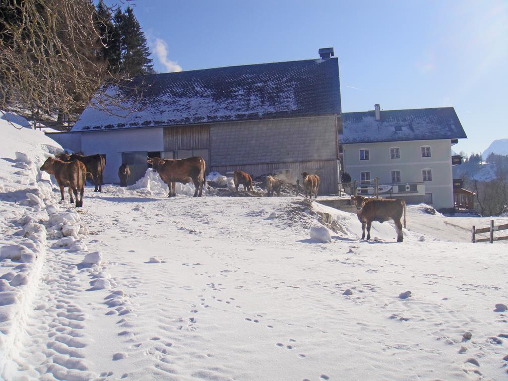 Ferienwohnung Ferienhof Bruderhof Apartment/2 Schlafräume/Dusche, WC (606977), Hinterstoder, Pyhrn-Priel, Oberösterreich, Österreich, Bild 4