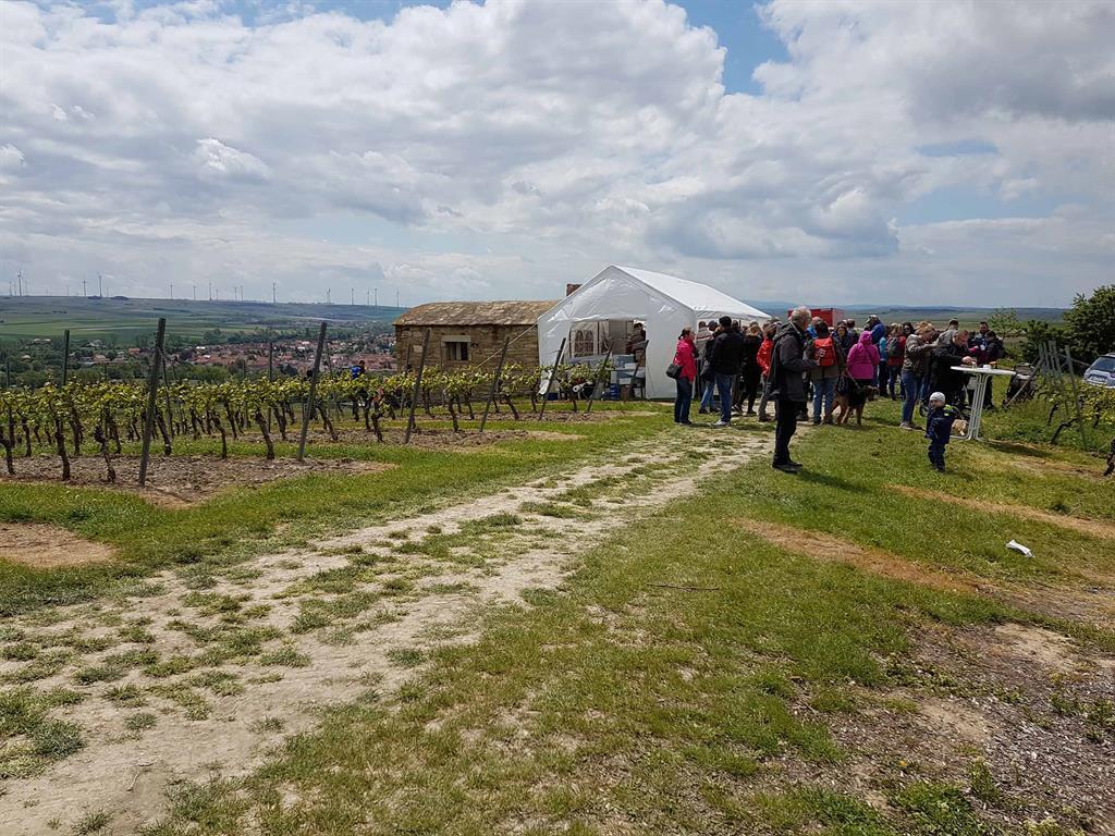 Weinwanderung Bechtolsheim