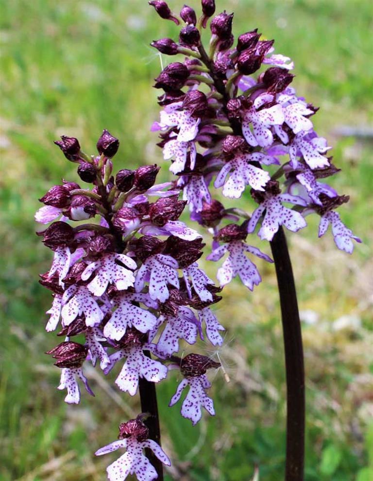 Orchideenführung