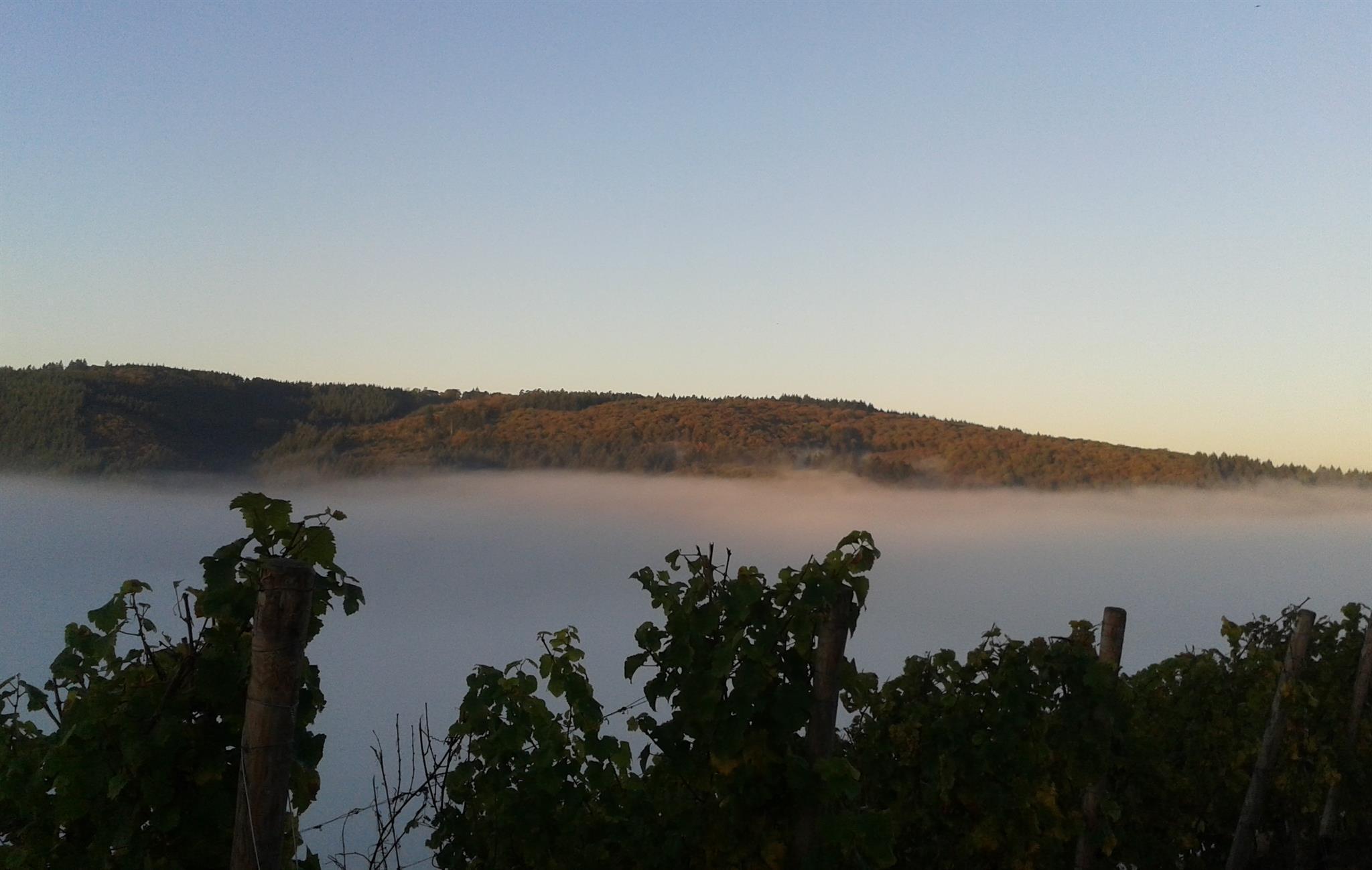 Blick aus unserem Weinberg bei Nebel