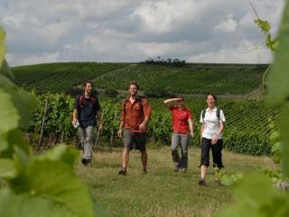 Weinwanderwochenende Rheinhessen