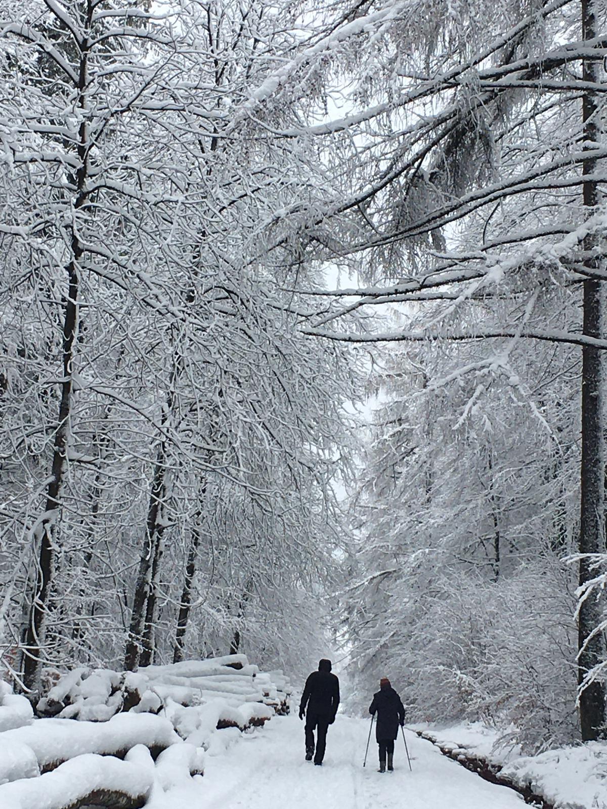 Spaziergang im Winterwald