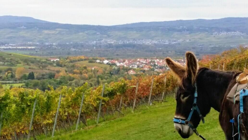 Esel in der Rheinhessischen Schweiz