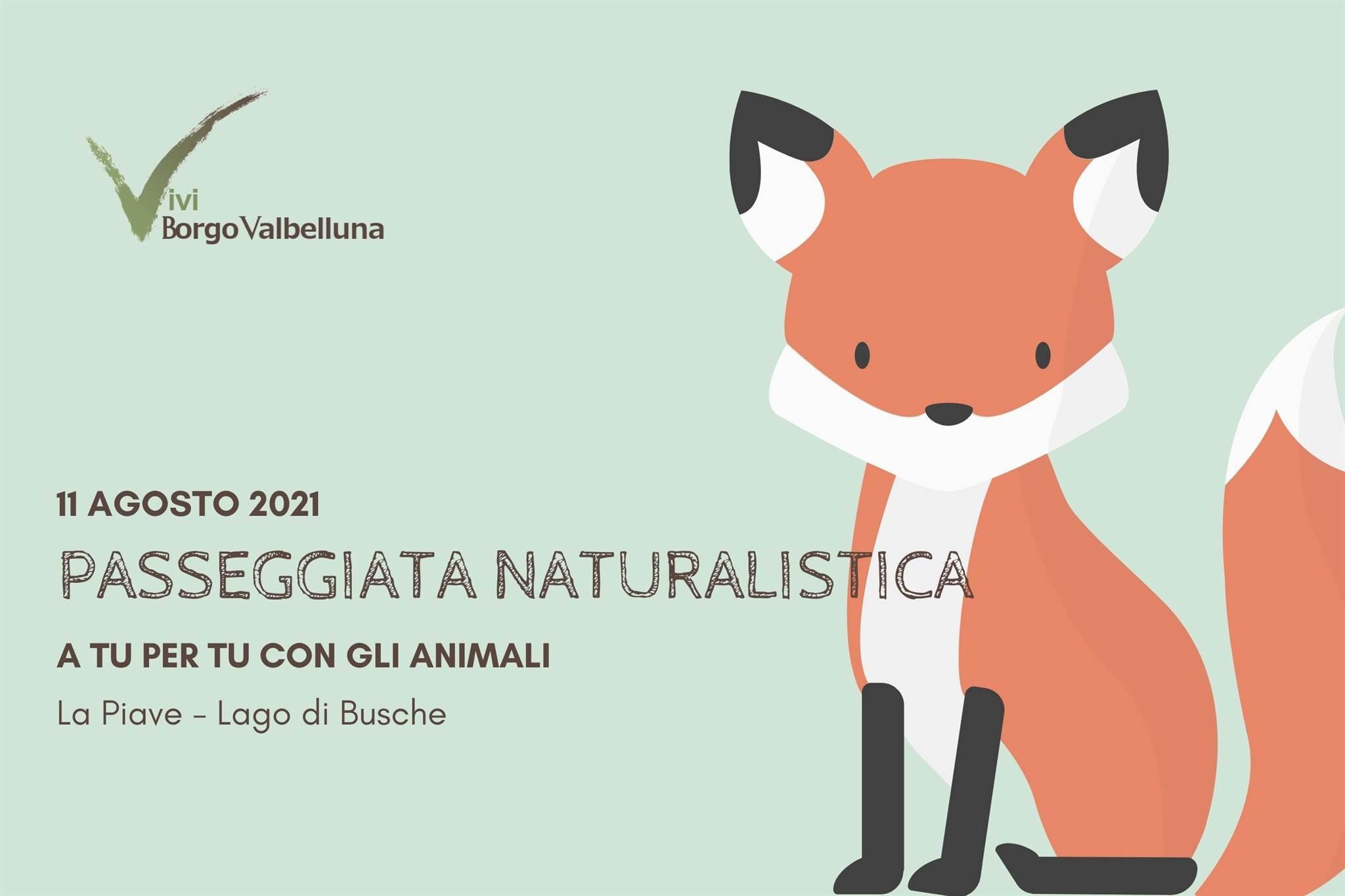 Vivi Borgo Valbelluna – A tu per tu con gli animali