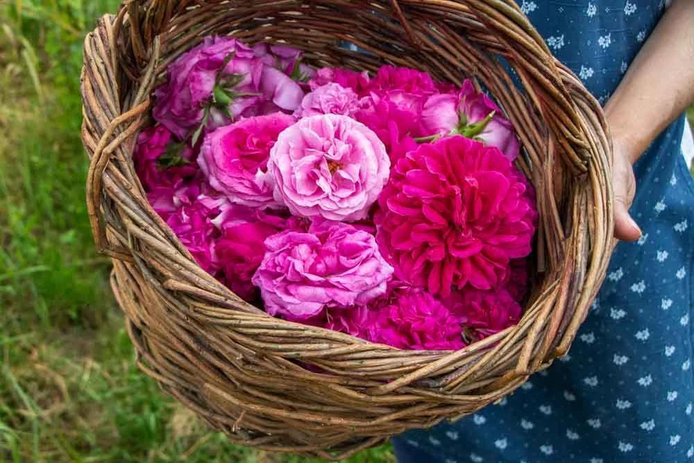 Roses to taste