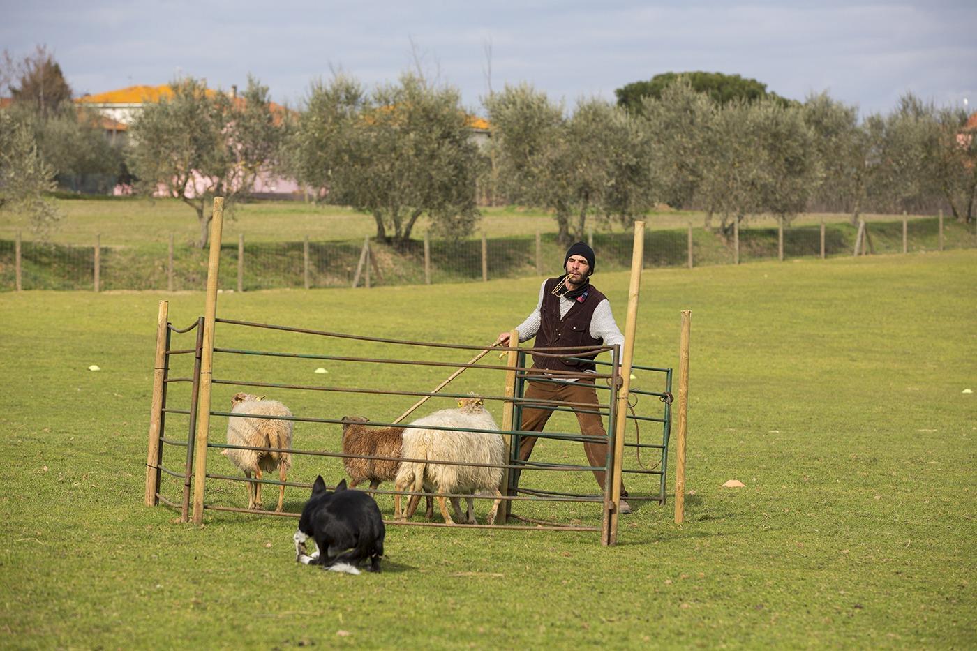Millegrobbe Sheepdog Trial 2021